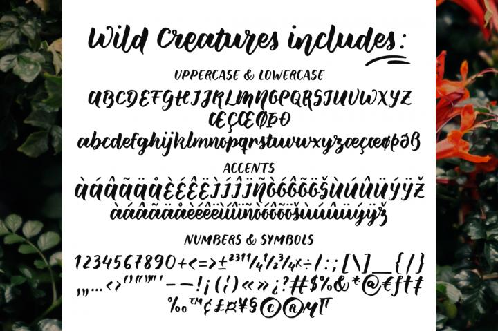 Freebies: Wild Creatures Font