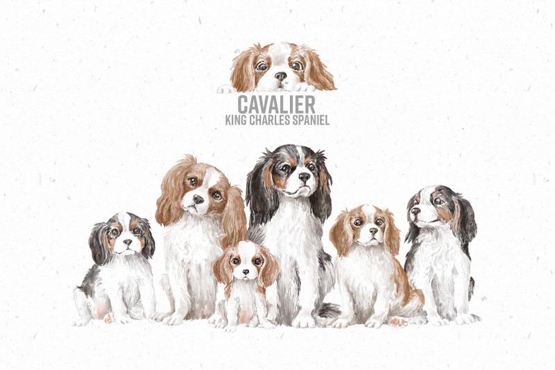 Seize The Adorable Pet Bundle with 91% OFF now!